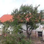střecha Starý Ples 013